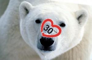 Titelfoto polarbär mit Herz detail